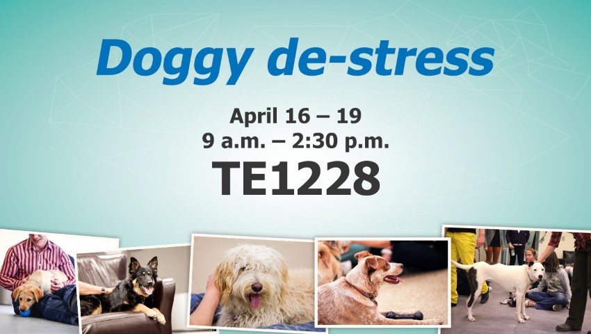 doggy de-stress