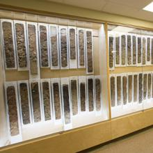 A decades-old collection of soil monoliths is now on display on the third floor of the Cousins Building.